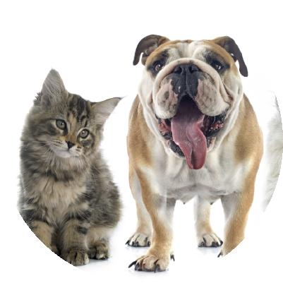 Imagem do informativo sobre anorexia em cães e gatos